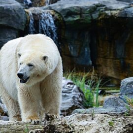 "Video 16/19: ""White Bears"""