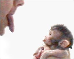 imitation-monkey-250