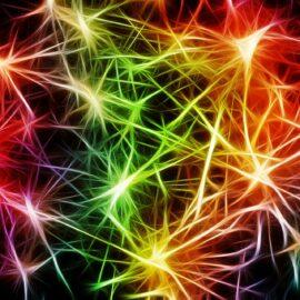 Mold Your Brain: Neuroplasticity