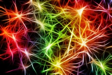 Mold Your Brain: Neuroplasticity