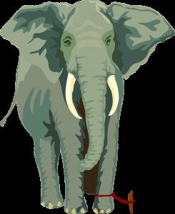 elephant-304777_1280