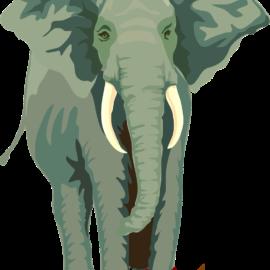 The Elephant's Noose