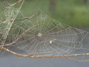 spider-web-617754_1920