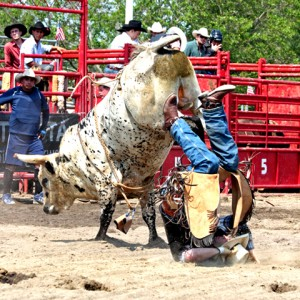 Bull-Riding-VII.small