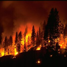 Fighting a Forest Fire –  Your Pain