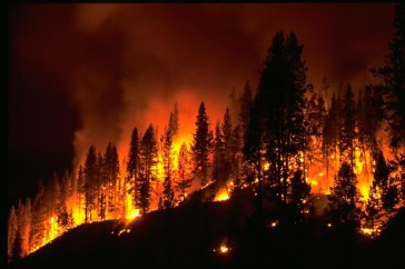 Fighting a Forest Fire –  Address All Aspects of Your Pain