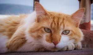 cat-2498509_1920