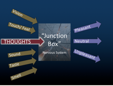 Neurophysiological Basis of Pain