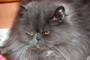 cat-574276_1920