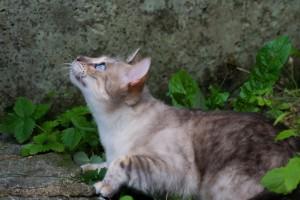 cat-2603541_1920