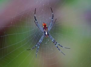 spider-3202834_1920