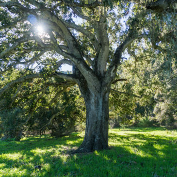 Your Home–Oak Tree or Military Barrack