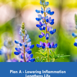 Plan A–Lowering Inflammation Lengthens Life